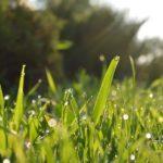 草むしりの日焼け対策にはタープがおすすめ!