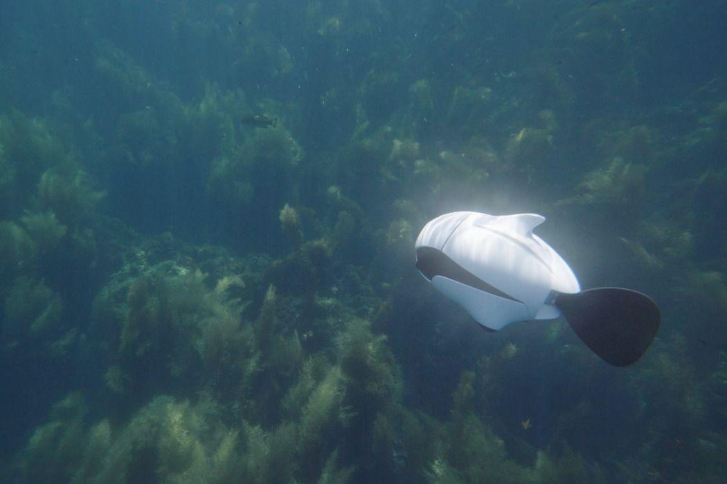 水中ドローン「BIKI」なら水中の魚も自在に撮影できる!